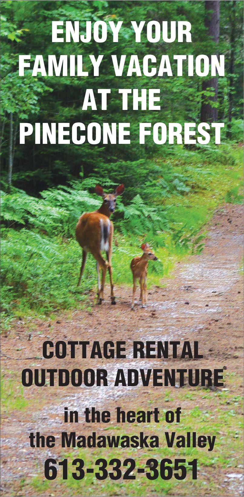 Enjoy Your Family Vacation at The Pinecone Forest--Cottage Rental, Outdoor Adventure